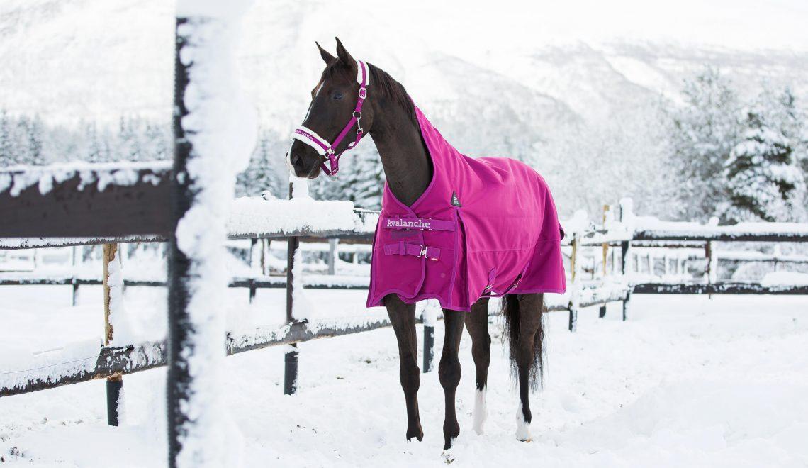 Pferd-Reiter
