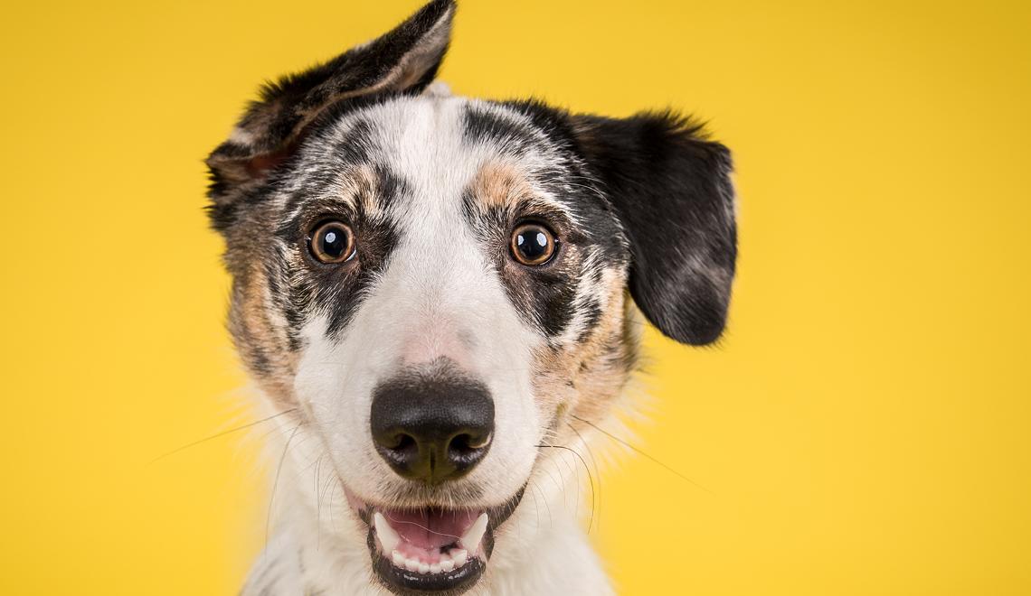 Hunde – Tipps und Tricks für ein schönes Zusammenleben